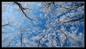 Winter sky - panoramically by Rajmund67