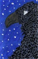 Starry Night Raven ACEO ATC by leopardwolf