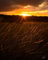 Grasses by andy1349