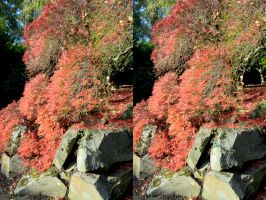 An Ordinary Autmnal Cross Eye Viewable Stereo Pair by aegiandyad