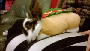 Runty the rabbit (in a hotdog costume!) by Danzeh