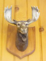 Stock: Moose Head by Stock-By-Michelle