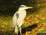 The Heron by SmwtPhotography