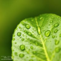 deliciousgreen II by PatrickRuegheimer