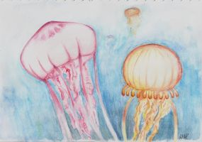 Jellies by LittleGreenSpirit