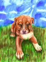Red-Nose Pit Pup by chezarawolf
