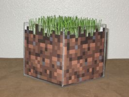 Minecraft Dirt Block IRL (with live grass) by GoodAsh03
