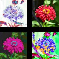 Four Renditions of a Daisy by Urceola