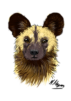 African dog sketch request for Linzlor by HannahMeyers