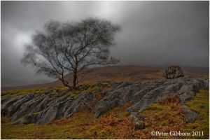 Lone Tree and Boulder by Photo-Joker