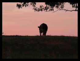 last cow standing by photom17