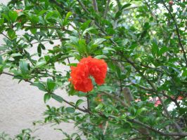 Red flower in the tree by jkno4u