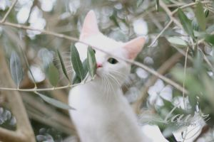 Whiskers by lauzphotography