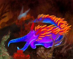 Muro Nudibranch by medli20