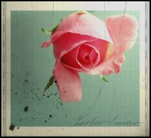 ...a rose by Suzie006