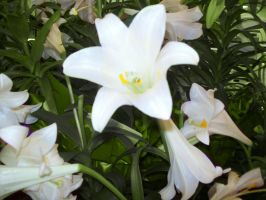 Easter Lilies by goddess-pandora
