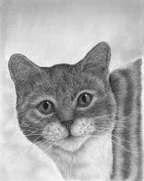 THE GRAPHY CAT by sagarlike