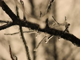 Icy Branch by Morna