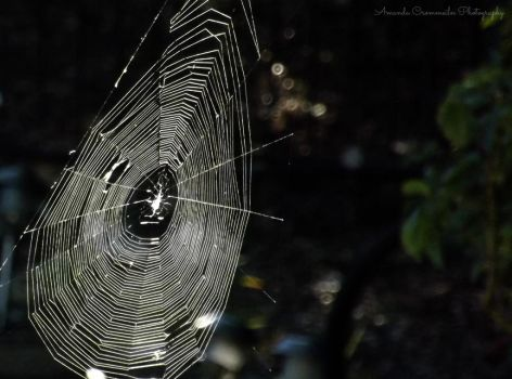 Sunshine Spiderweb by ArtCromm