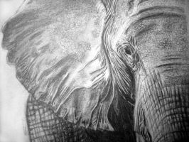Elephant Drawing by Bolbec