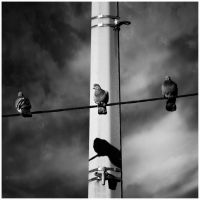 Three perched by Malcolm21