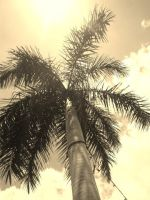 Palm by DundraXX