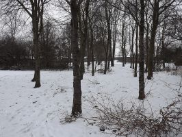 Trees in the snow by captainflynn