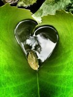 A heart shaped Leaf by DrinkFromHumanSkulls