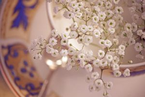 Cup of baby breath by Pamba