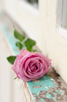 Rose on a Window Ledge by patchoulipatch