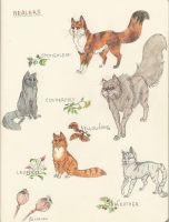 Thunderclan Healers by ThePyf