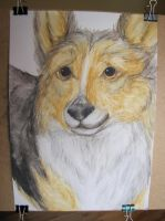 Welsh Corgi by iimoa