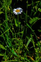 The white flower. by Mackingster