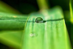 Drop On Leaf Reed by hubert61