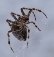 Spider 03 by Limited-Vision-Stock
