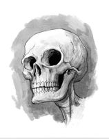 skull sketch by alanrobinson