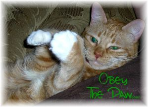OBEY the PAW...