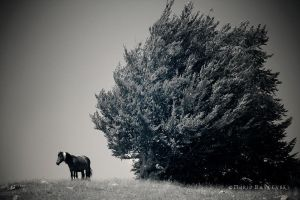 loneliness. by mario19