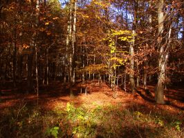 forest 41 by Pagan-Stock