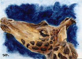 aceo giraffe by kailavmp