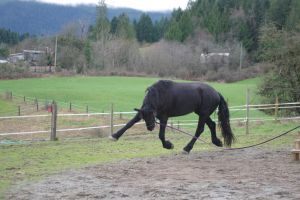 Horse playing stock by OnlyYouCan