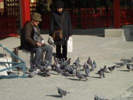 A man and his birds... by barondoonx
