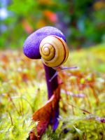 Talk to the Shell by FreyaPhotos