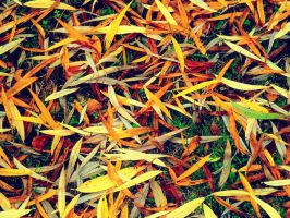 Autumn Leaves by nviki89