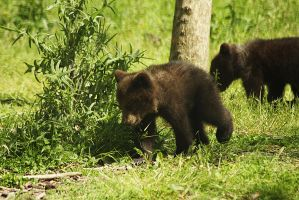 little cubs by marob0501