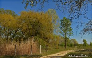 April in Hungary.  HDR-picture by magyarilaszlo