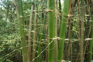 Bamboo XI by KW-stock