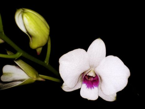Orchid I by beself
