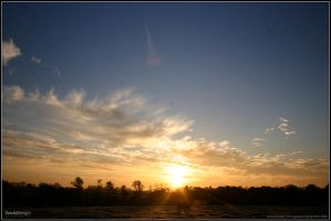 Sun rise over horse field... by dowdall