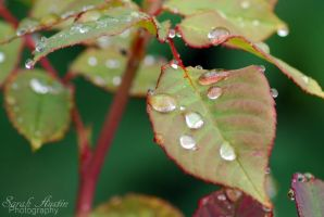 Tears of nature. by CapnSarah